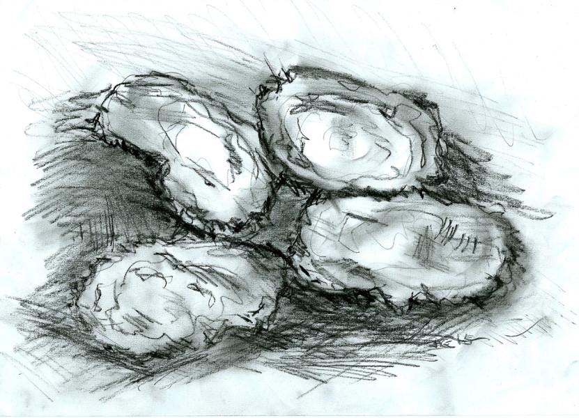 oystersSmaller2